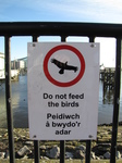 SX25763 Do not feed the birds of prey.jpg