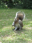 SX26894 Squirrel itching.jpg