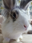 LZ00058 Cleo the rabbit.jpg