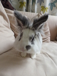 LZ00160 Cleo the big eared rabbit.jpg