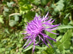 FZ006805 Purple flower.jpg