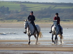 FZ010134 Horses at Three Cliffs Bay.jpg