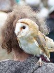 FZ013006 Woman with Barn Owl (Tyto alba) on her shoulder.jpg