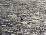 FZ013496 Silhouette of bird on sand.jpg
