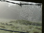 FZ022602 Dew covered spiderwebs.jpg