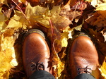 FZ024259 New shoes in autumn leaves.jpg
