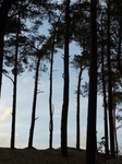 FZ025006 Silhouette of trees.jpg