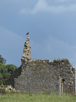 FZ030659 Buzzard on ruined house.jpg